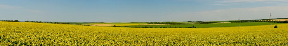 Panorama on the field Royalty Free Stock Photos