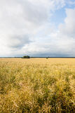 Panorama of the field on a cloudy day Stock Image