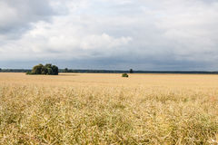 Panorama of the field on a cloudy day Stock Photo