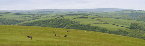 Panorama of field in Cornwall, england Royalty Free Stock Photo