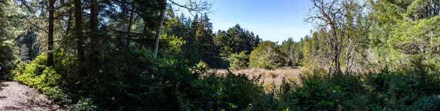 Panorama of a field in the Pacific North West royalty free stock image