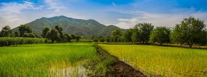 Panorama field Royalty Free Stock Photography
