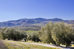 Panorama of the fields in Andalusia. royalty free stock photography