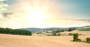Panorama of fields with cultivated plants Royalty Free Stock Photography