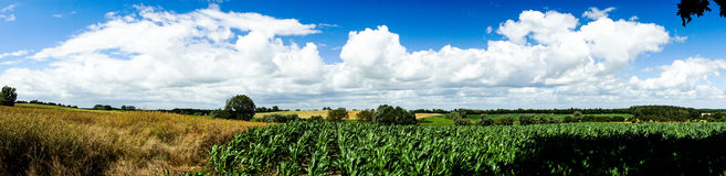 Panorama of fields and meadows. In summer Stock Image