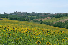 Panorama of Filottrano (Marches) with sunflowers Stock Images