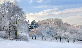 Panorama. First snow in the park. Stock Photography