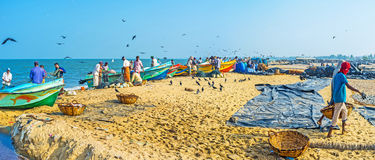 Panorama of fishing port in Negombo Stock Image