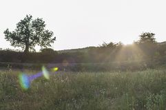 Panorama with flare effect Stock Image