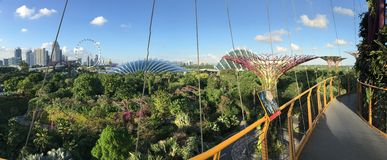 Panorama from the flower dome, Singapore Flyer and skyline Royalty Free Stock Image