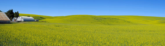 Panorama flower field with farm house Stock Images