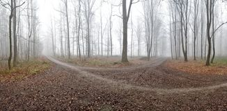 Panorama of foggy forest Stock Photo