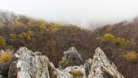 Mixed Autumn forest panorama Stock Photography