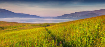 Panorama of the foggy summer morning in the mountains Royalty Free Stock Photos