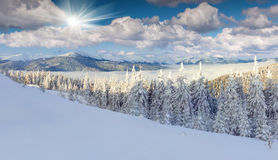 Panorama of foggy winter morning in mountains royalty free stock images