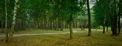Panorama of the forest stock photos