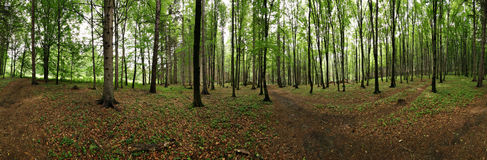 Panorama of forest stock photography