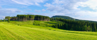 Panorama with forest Royalty Free Stock Photo