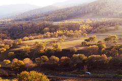 Panorama of Forest in autumn Royalty Free Stock Photo