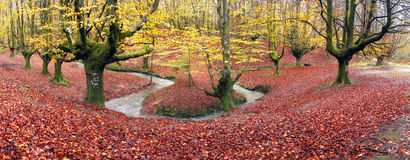 Panorama of forest in autumn Stock Photo