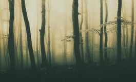Panorama of forest background with beautiful sunlight royalty free stock photography