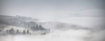 Panorama of forest covered by low clouds. Autumn rain and fog Stock Photography