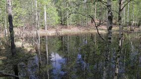 Panorama of the forest creek during the spring high water. Inside the wild spring taiga. The forest lake formed during the spring high water. Camera turn from stock video