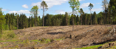 Panorama. Forest after felling trees. stock photos