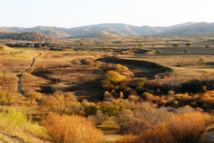 Panorama of Forest and grassland in autumn Stock Photography