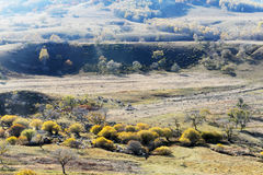 Panorama of Forest and grassland in autumn Royalty Free Stock Photo