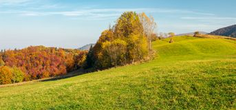 Panorama of forest on grassy hill in autumn. Beautiful rural scenery of mountainous countryside in sunny october weather royalty free stock photography