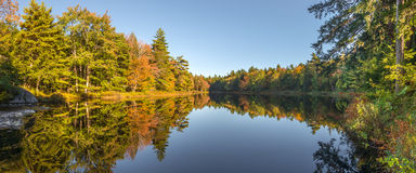 Panorama of a  forest lake in fall Royalty Free Stock Image
