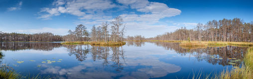 Panorama of forest lake. Stock Images