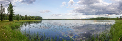 Panorama of forest, lake and swamp. Panorama with overgrown swampy lake shore and forest in the background Stock Images