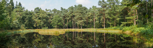Panorama of forest reflecting in lake Royalty Free Stock Photography