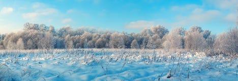 Panorama- foto av vinterskogen royaltyfri foto