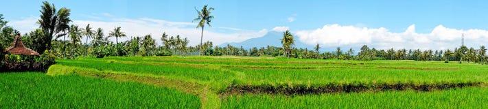 Panorama från risfältlandskap på den Java ön, Indonesien Royaltyfri Fotografi