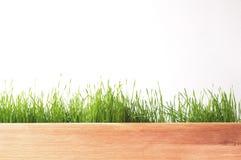 Panorama frais d'herbe verte de ressort d'isolement sur le fond blanc Photographie stock libre de droits