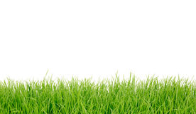 Panorama frais d'herbe verte de source. Photographie stock libre de droits