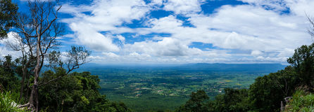 Panorama of fresh green forest nature against beautiful blue sky Stock Photo