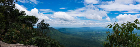Panorama of fresh green forest nature against beautiful blue sky Stock Photography