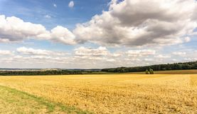 Freshly harvested agricultural field with stubble Stock Photo