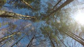 360 panorama girante del lasso di tempo di legni, corona degli alberi, bei giorni soleggiati stock footage