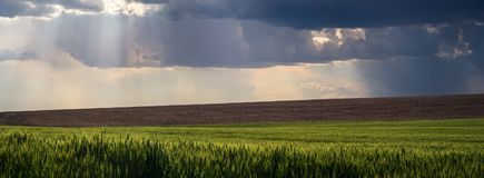 Panorama: god rays over the Palouse stock photo