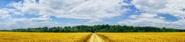 Panorama of golden wheat field. Stock Photo