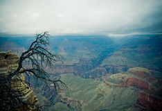 Panorama of Grand Canyon Stock Image