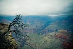 Panorama of Grand Canyon Stock Image