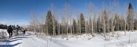 Panorama - grande gruppo di viandanti dello snowshoe Immagine Stock