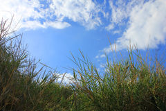 Panorama with grass and clouds. A panorama with grass and clouds Stock Photos