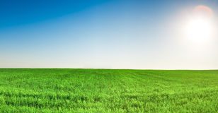 Panorama of grass field under blue sky and sun Royalty Free Stock Photo